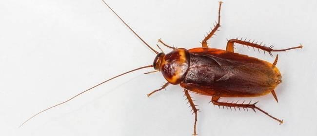 Домовые насекомые в квартире: названия и фото