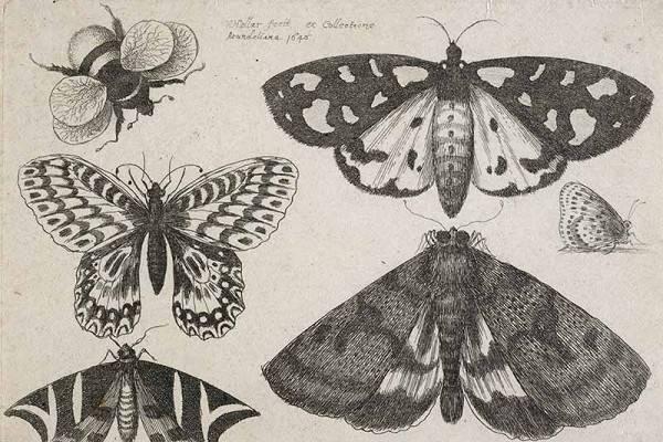 Пятерка самых опасных насекомых, переносящих заболевания человека