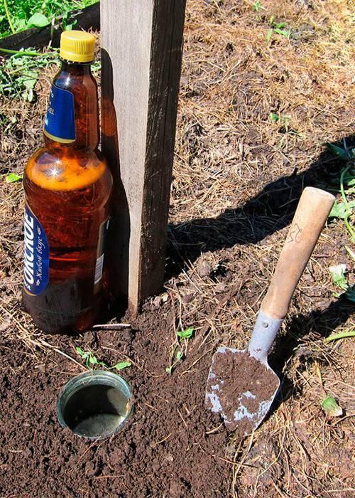 Как избавиться от медведки на огороде