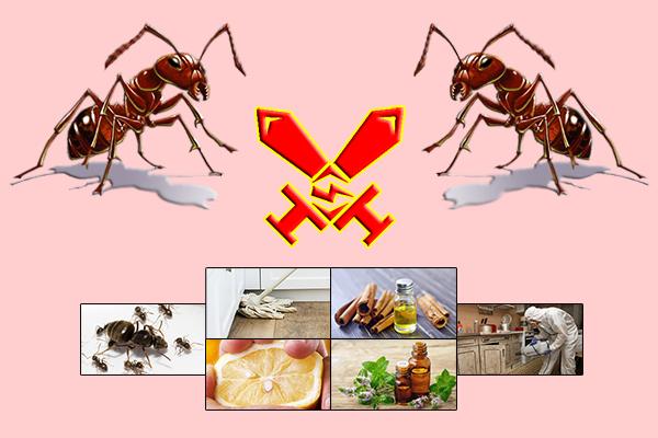Как избавиться от муравьев в частном доме народными средствами