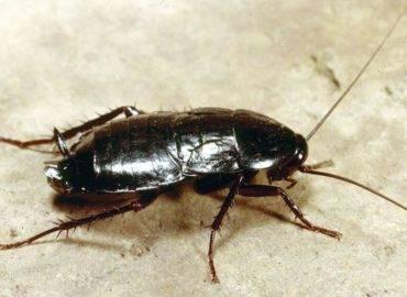 Откуда берутся тараканы в доме или квартире. что можно сделать?