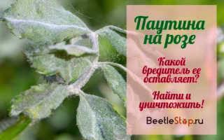 Как победить паутинного клеща на комнатных растениях
