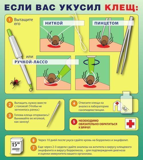 Реакция на прививку от клещевого энцефалита