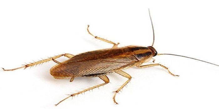Тараканы во сне к чему снятся