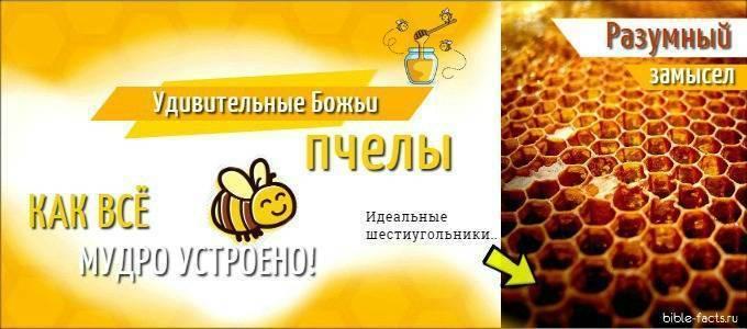 Все самое интересное о пчелах, осах и шмелях