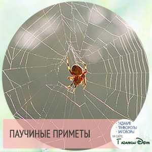 Паук сплел паутину в доме. паутина – все приметы, связанные с паучьей сетью