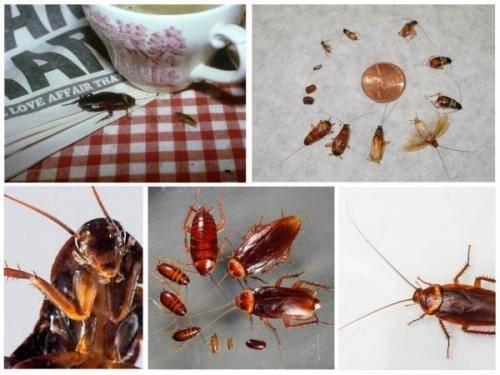 Где в квартире прячутся тараканы?