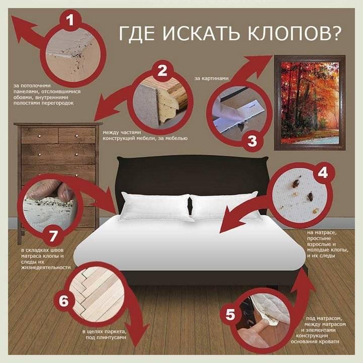Как домашние постельные клопы кусают человека?