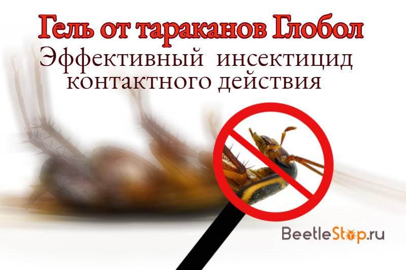 Дихлофос в борьбе против тараканов: как использовать и отзывы