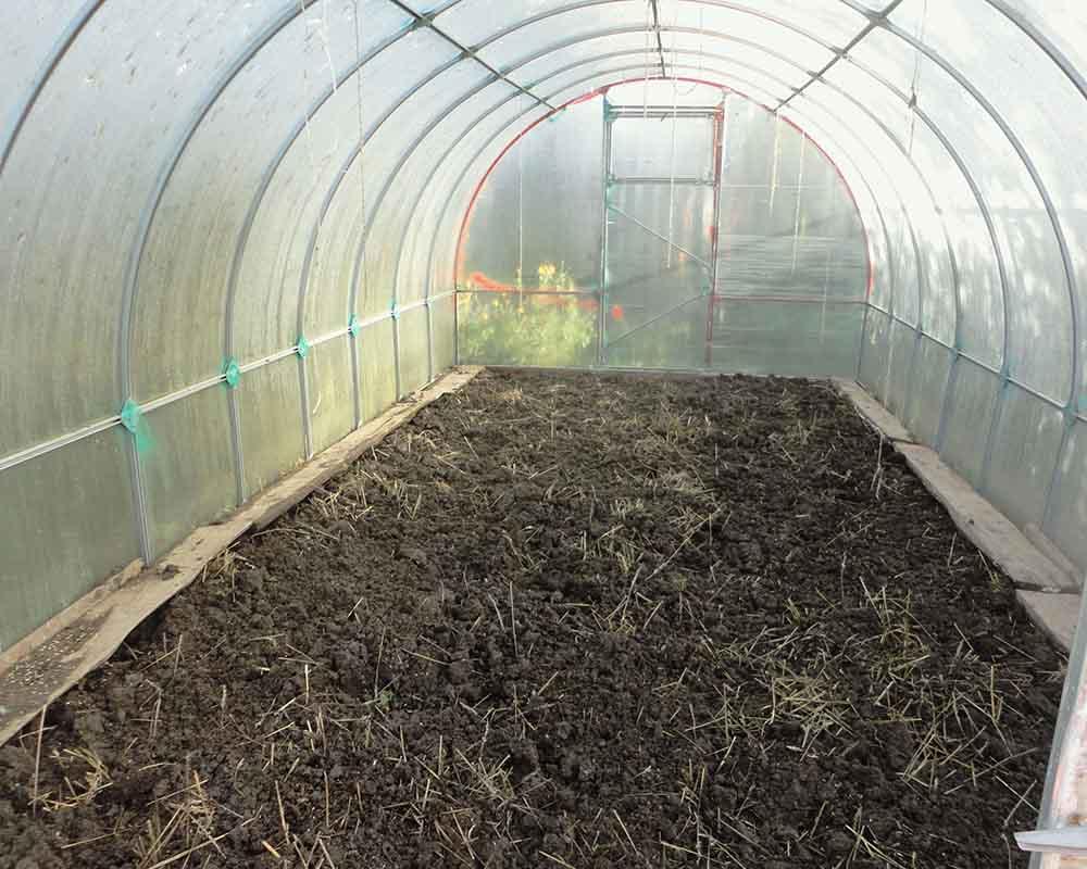 Обработка теплицы из поликарбоната весной перед посадкой растений: правильный порядок профилактических работ