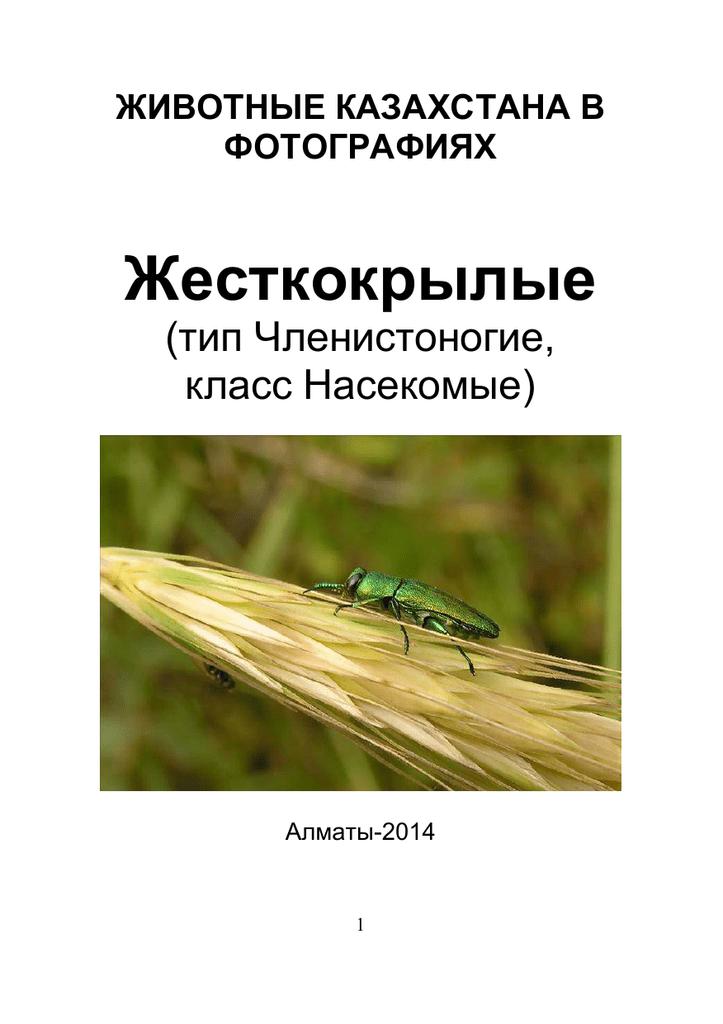 Красноголовый пилильщик ткач— враг сосны в лесах и посадках