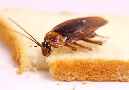 Как избавиться от тараканов в общежитии? куда жаловаться?