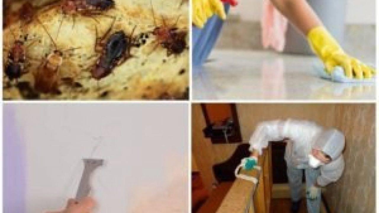 Уничтожение клопов холодным и горячим туманом в квартире: описание, отзывы