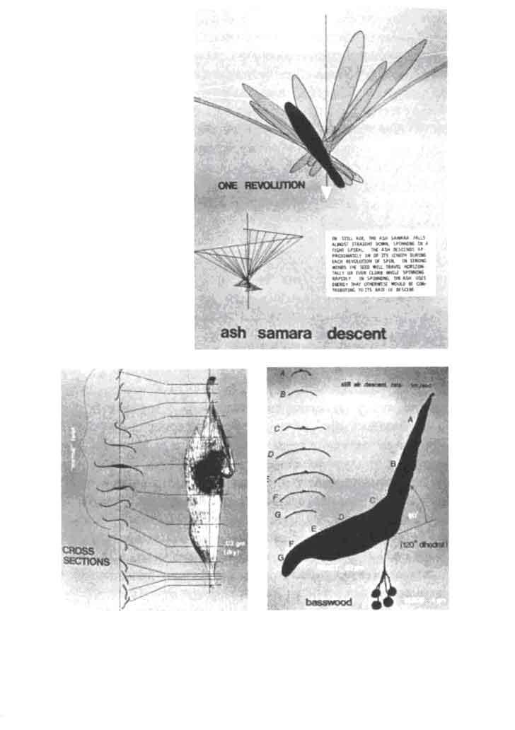 Стрекоза – описание, ареал, питание, виды, враги, размножение, фото и видео