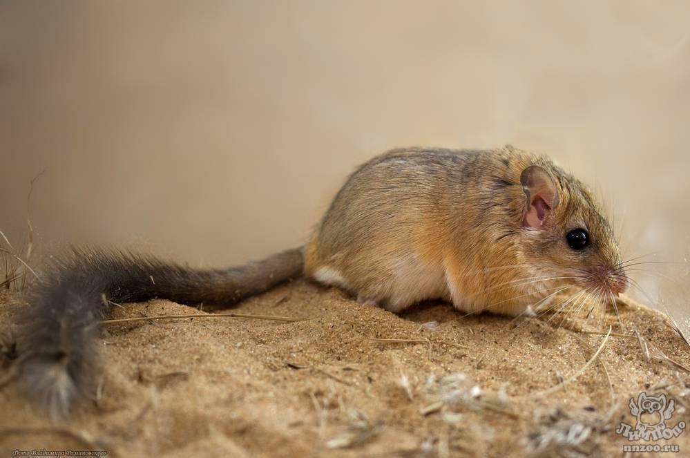Летучие мыши – все об уникальных летунах