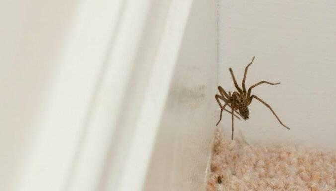 Как избавиться от пауков в квартире и в частном доме навсегда