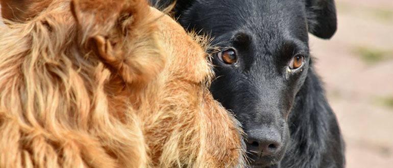 Вши у собак — симптомы и лечение