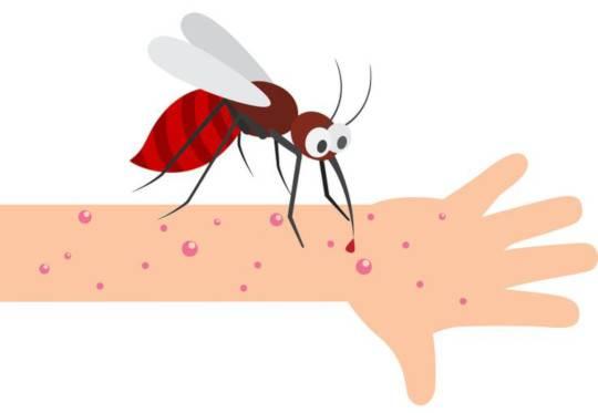 Волдыри от укусов комаров у ребенка и взрослого