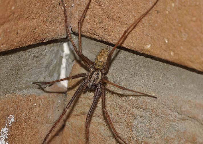 Пауки – виды пауков, названия, описание, фото и видео