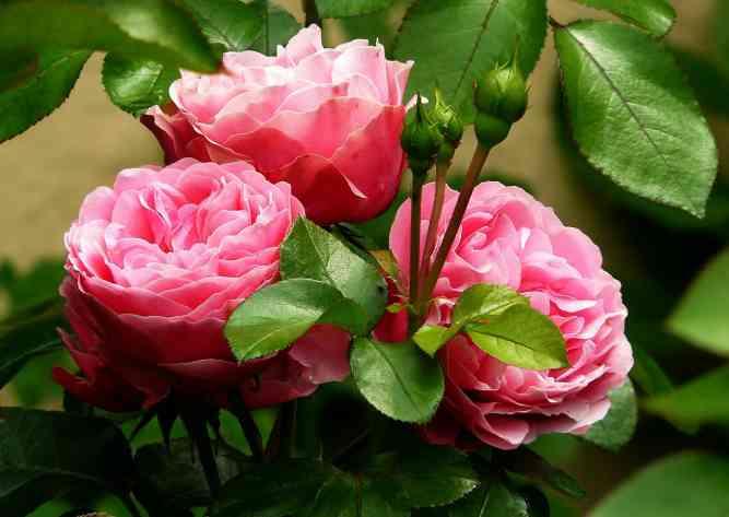 Кормит и лечит: полезный йод для садовой земляники