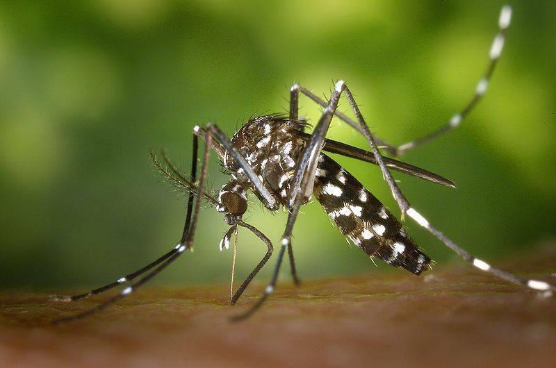 Личинки комаров: как называются и чем питаются. чем питается комар? обзор предпочтений насекомого в зависимости от пола и стадии развития