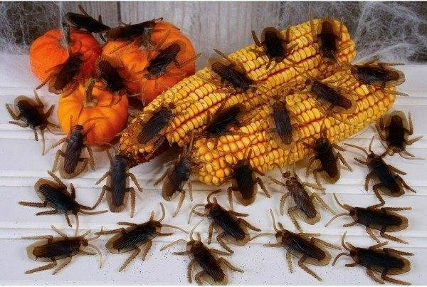 Прозвища тараканов — стасики и прусаки: почему так назвали и от чего пошло?