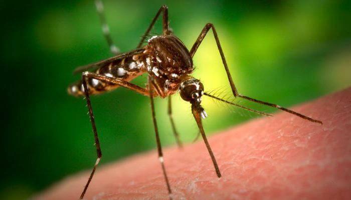 Что означает образ комара во сне – толкования по сонникам и согласно народным поверьям. кусают комары