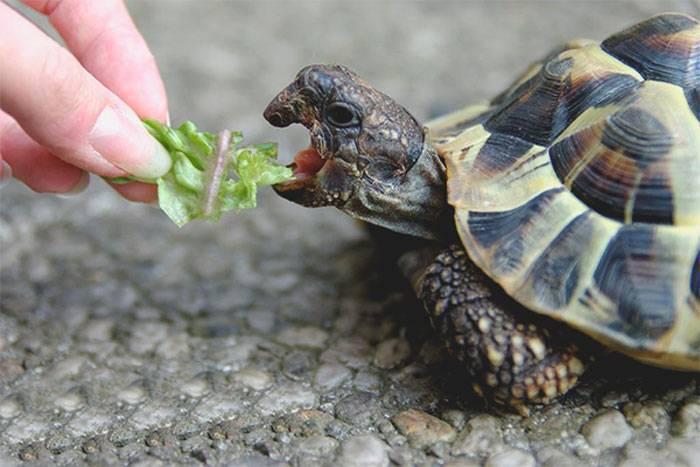 Что едят улитки в аквариуме и чем запрещено их кормить?