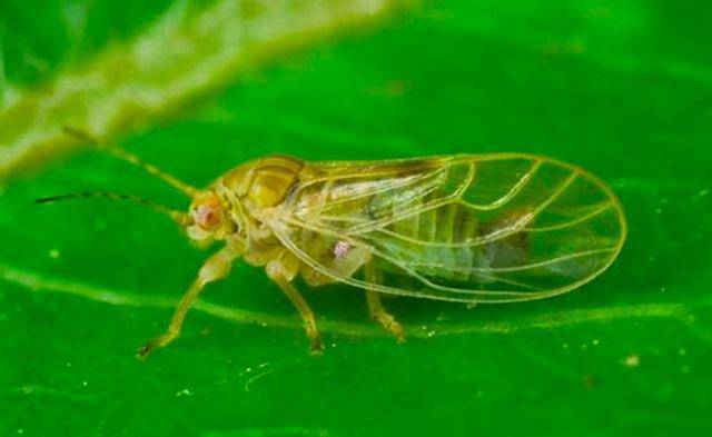 Болезни яблонь и груш: фото, описание и лечение