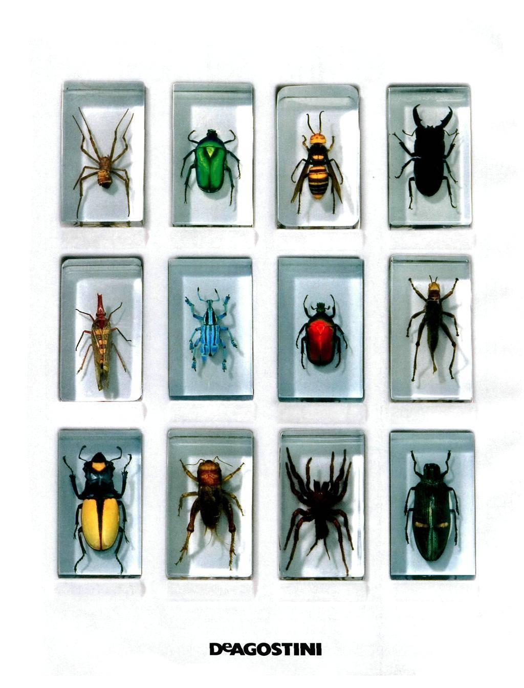 Ощупник — таинственный обитатель муравьиных гнезд