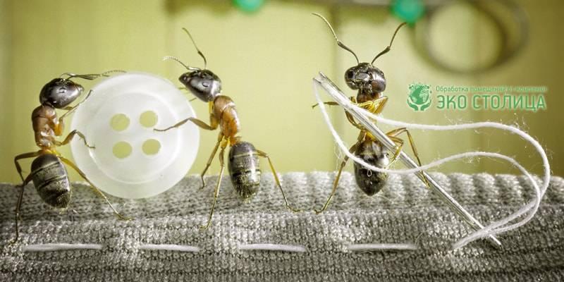 Как очистить дом от чёрных муравьёв — простые способы