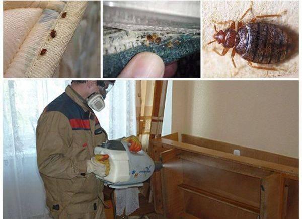 Война насекомым: чем травить клопов в квартире самостоятельно