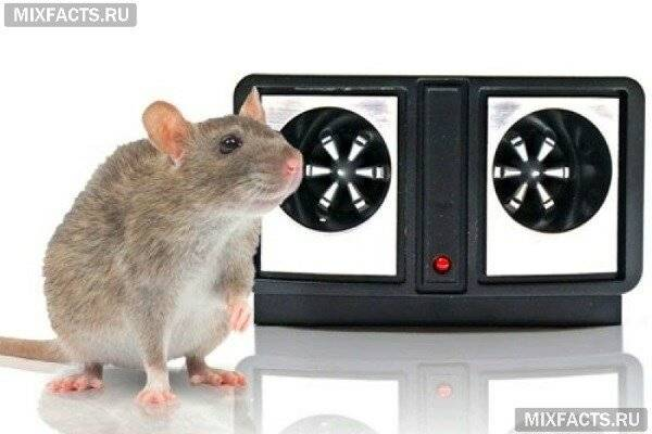 Лучшие отпугиватели крыс и мышей: 5 топовых моделей