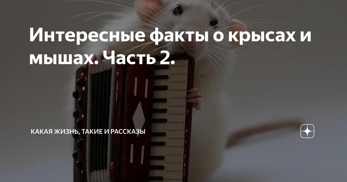 Интересные факты про мышей. интересные факты