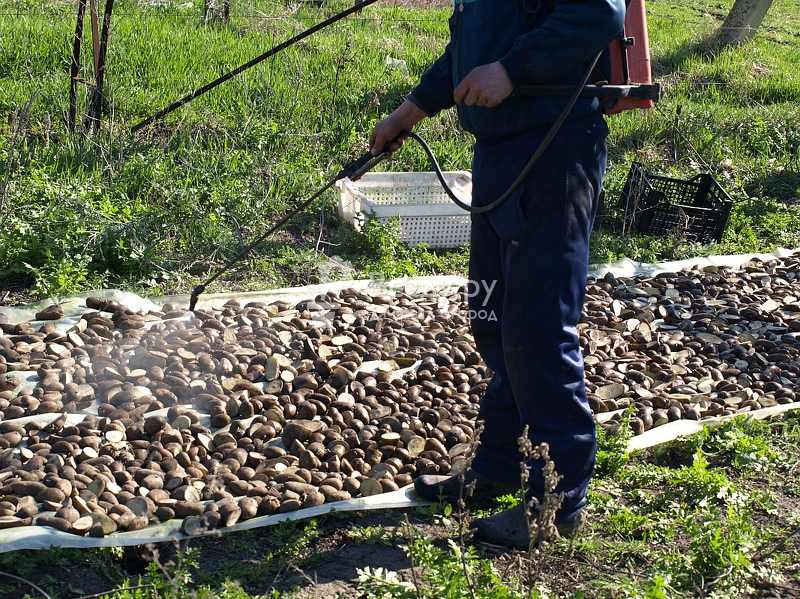 Препарат престиж для обработки картофеля: особенности и аналоги