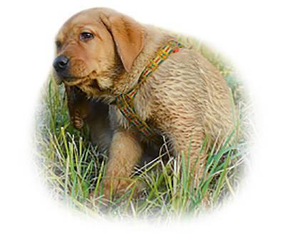 Всё, что нужно знать про вшей у собак. живут ли на четвероногих и чем обработать от них?
