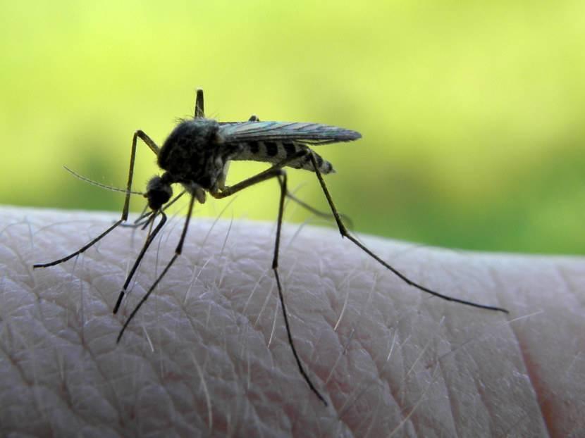 Доклад про комара 2, 3, 5, 7 класс сообщение
