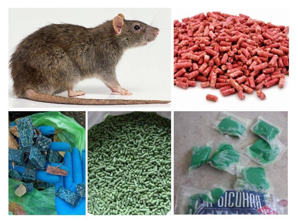 Как средство от мышей в доме самое эффективное?