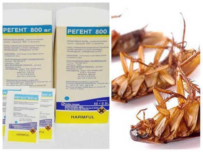 Регент от тараканов – безжалостный удар по синантропным насекомым