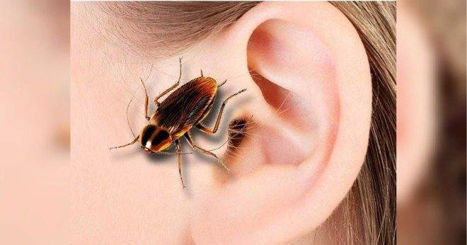 Вытащить из уха муху