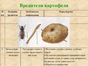 Борьба с основными вредителями картофеля