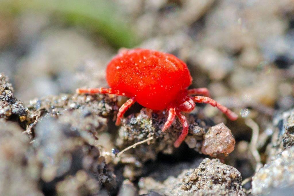 Красные клещи на растениях: виды, опасность, методы борьбы и профилактики