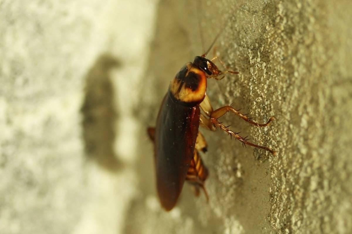 Гнезда тараканов: как найти в жилом доме