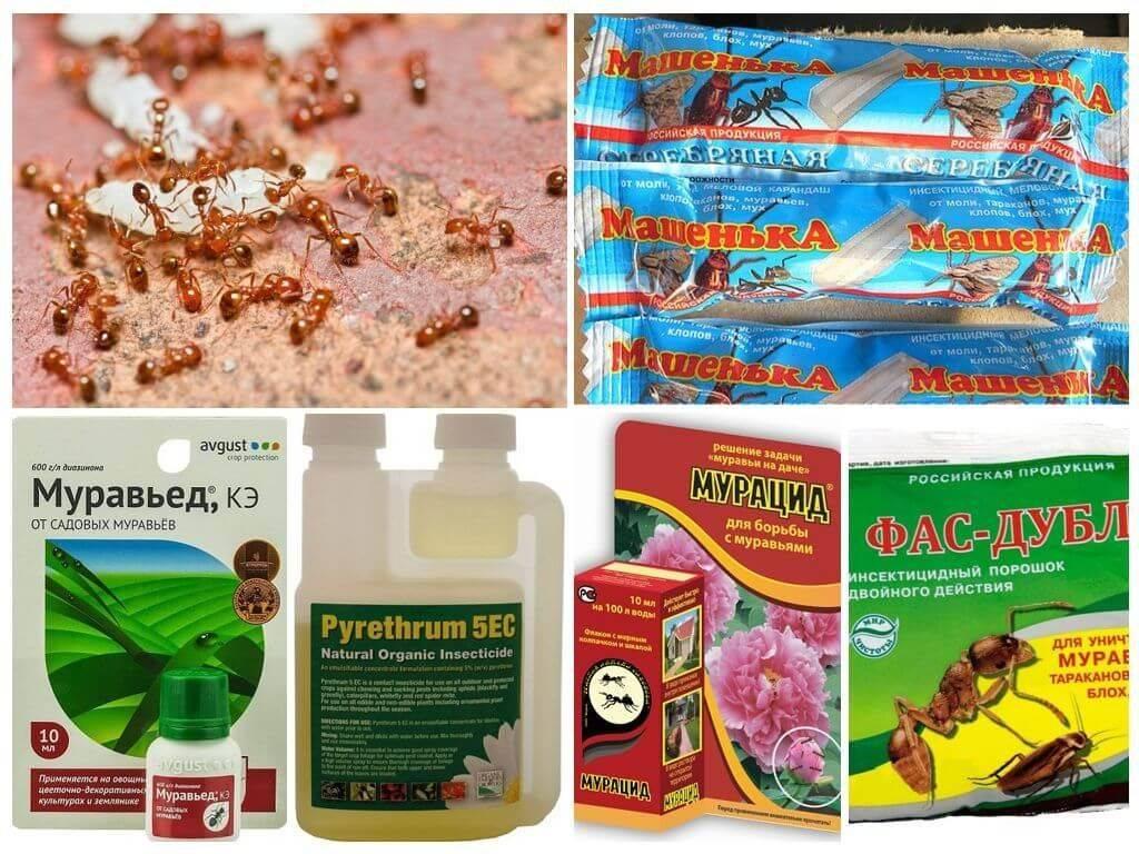 Средства для борьбы с муравьями в квартире и доме