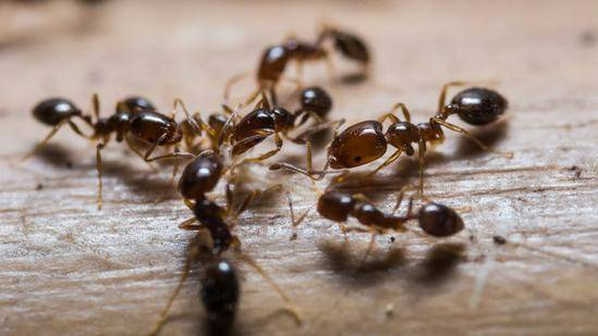 Законы муравейника