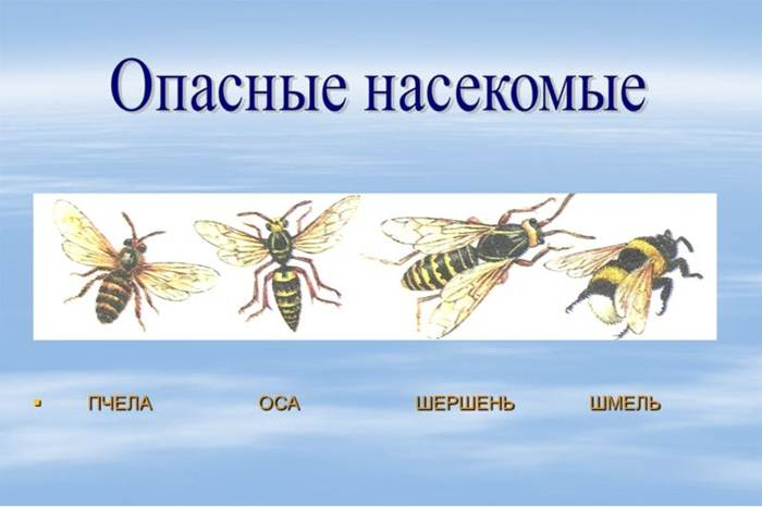 Делают ли осы мед: ответ пасечников