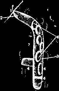 Шмель моховой – пушистый опылитель садов и полей