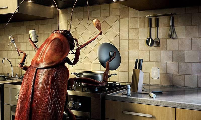 Самые эффективные ловушки от тараканов – выбор и применение