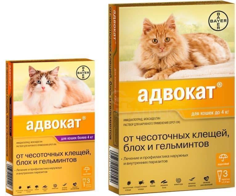 Капли от блох для котов и собак: инструкция по применению и отзывы
