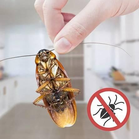 Метод истребления тараканов при помощи генератора горячего и холодного тумана